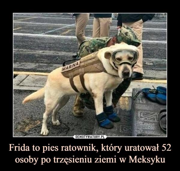 Frida to pies ratownik, który uratował 52 osoby po trzęsieniu ziemi w Meksyku –