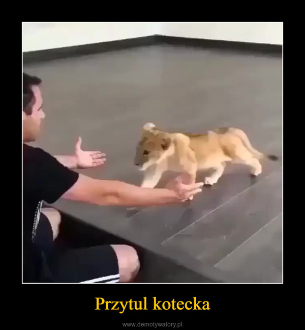 Przytul kotecka –