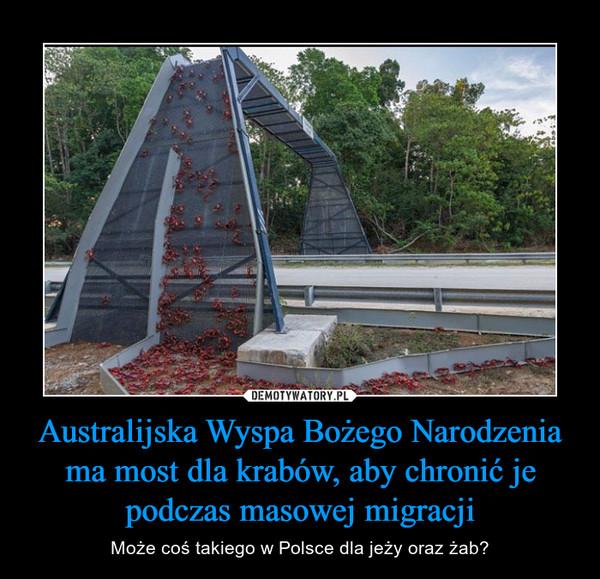 Australijska Wyspa Bożego Narodzenia ma most dla krabów, aby chronić je podczas masowej migracji – Może coś takiego w Polsce dla jeży oraz żab?