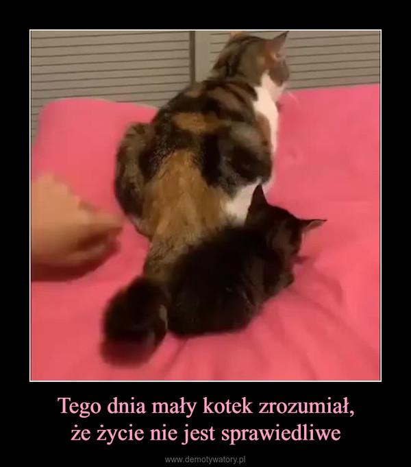 Tego dnia mały kotek zrozumiał,że życie nie jest sprawiedliwe –