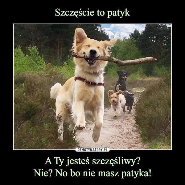 A Ty jesteś szczęśliwy?Nie? No bo nie masz patyka! –