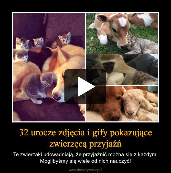 32 urocze zdjęcia i gify pokazujące zwierzęcą przyjaźń – Te zwierzaki udowadniają, że przyjaźnić można się z każdym. Moglibyśmy się wiele od nich nauczyć!