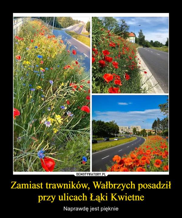 Zamiast trawników, Wałbrzych posadził przy ulicach Łąki Kwietne – Naprawdę jest pięknie