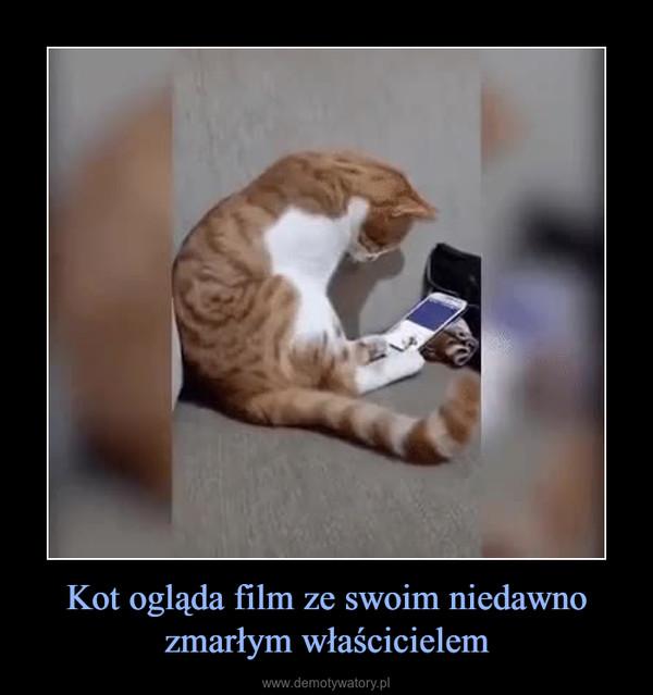 Kot ogląda film ze swoim niedawno zmarłym właścicielem –