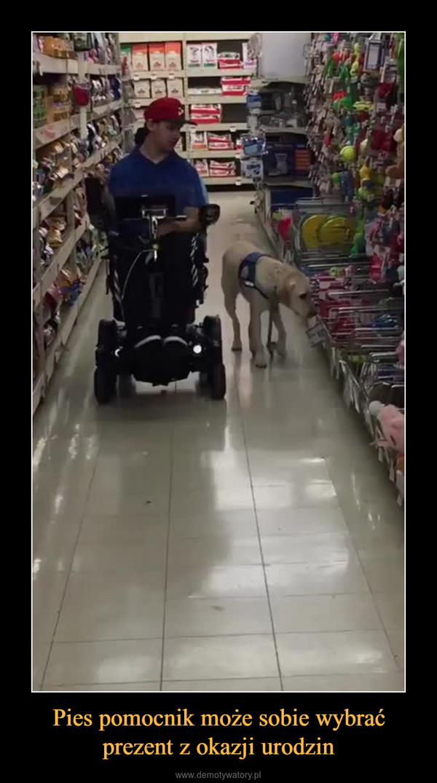Pies pomocnik może sobie wybrać prezent z okazji urodzin –