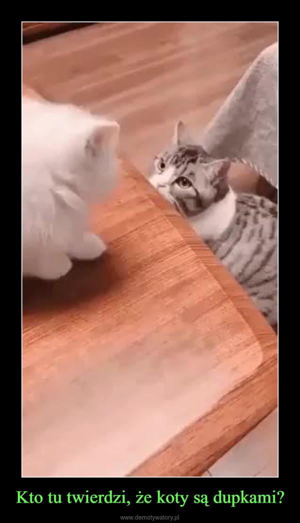 Kto tu twierdzi, że koty są dupkami? –