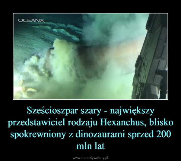 Sześcioszpar szary - największy przedstawiciel rodzaju Hexanchus, blisko spokrewniony z dinozaurami sprzed 200 mln lat –