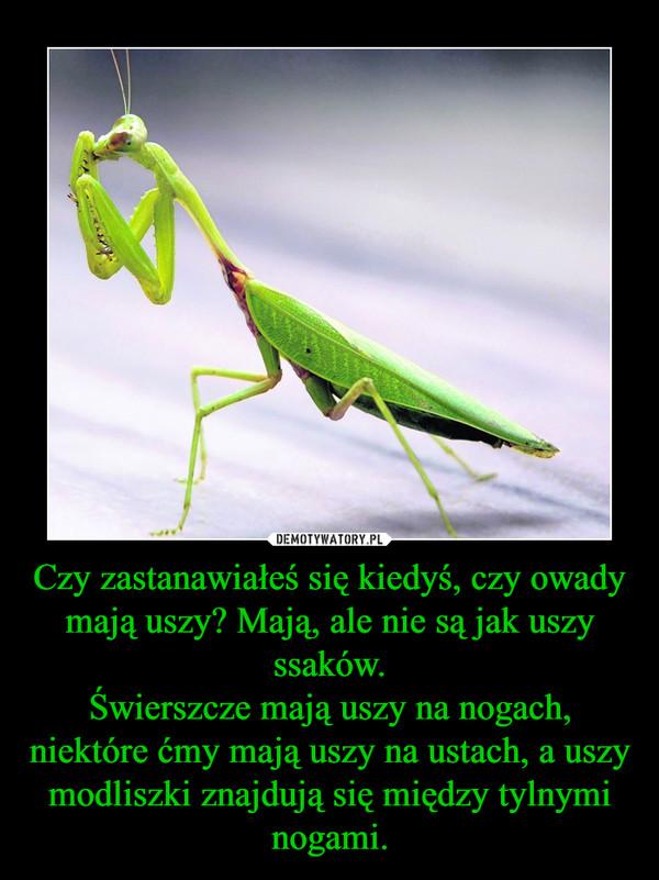 Czy zastanawiałeś się kiedyś, czy owady mają uszy? Mają, ale nie są jak uszy ssaków.Świerszcze mają uszy na nogach, niektóre ćmy mają uszy na ustach, a uszy modliszki znajdują się między tylnymi nogami. –