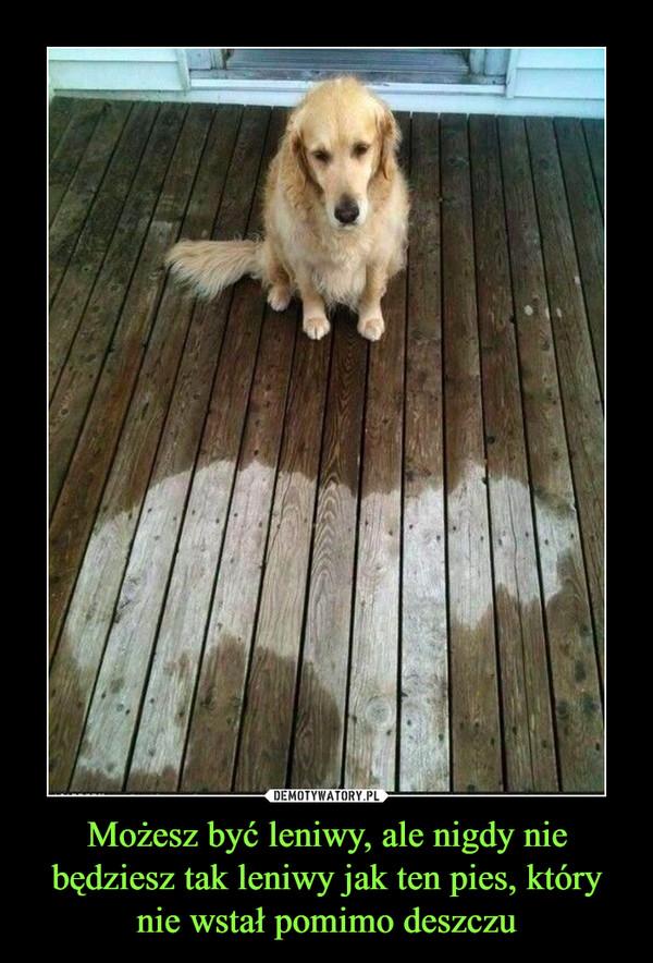 Możesz być leniwy, ale nigdy nie będziesz tak leniwy jak ten pies, który nie wstał pomimo deszczu –