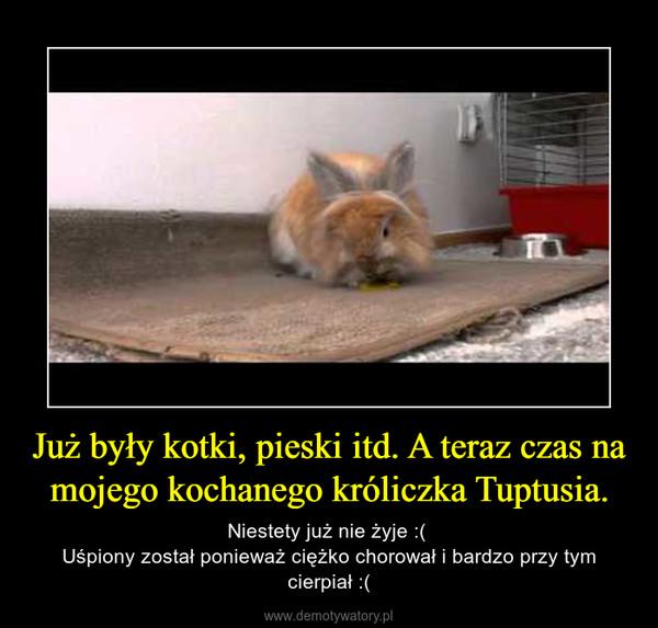 Już były kotki, pieski itd. A teraz czas na mojego kochanego króliczka Tuptusia. – Niestety już nie żyje :( Uśpiony został ponieważ ciężko chorował i bardzo przy tym cierpiał :(