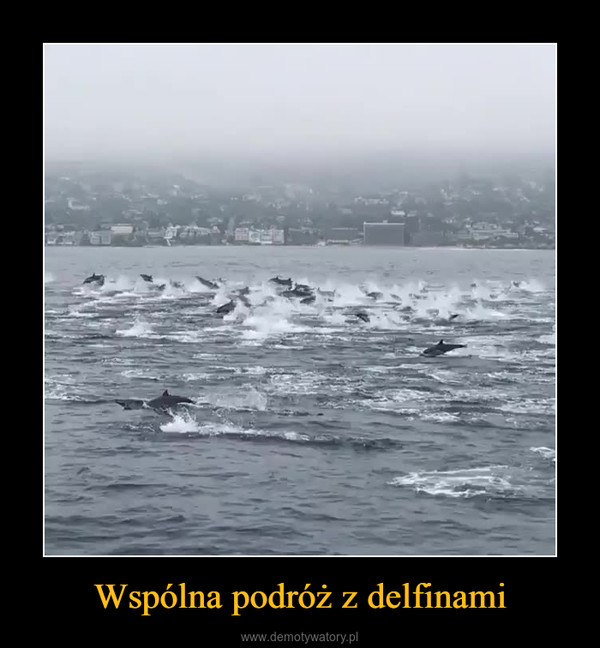 Wspólna podróż z delfinami –