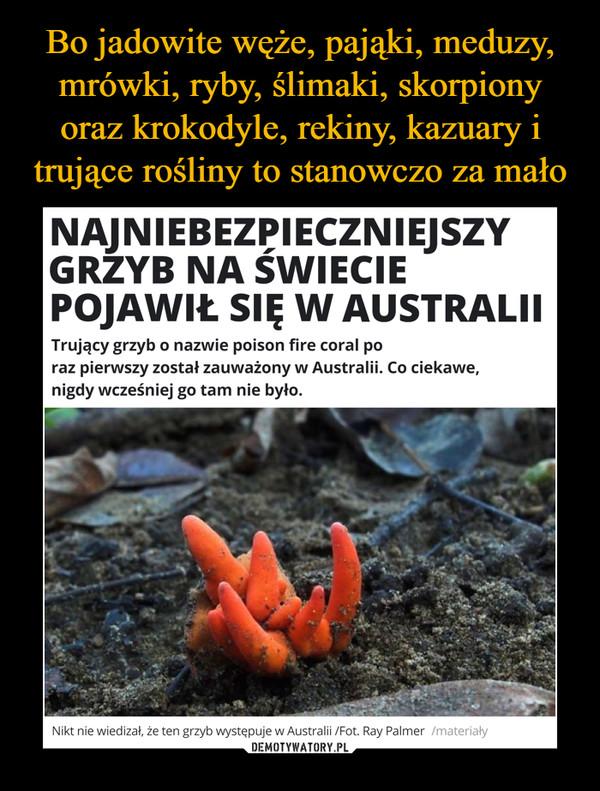 –  NAJNIEBEZPIECZNIEJSZY GRZYB NA ŚWIECIE POJAWIŁ SIĘ W AUSTRALIIZAGADKI PRZYRODY Trujący grzyb o nazwie poison fire coral po raz pierwszy został zauważony w Australii. Co ciekawe, nigdy wcześniej go tam nie było.