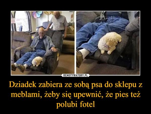 Dziadek zabiera ze sobą psa do sklepu z meblami, żeby się upewnić, że pies też polubi fotel