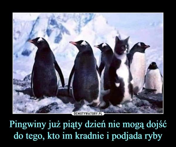 Pingwiny już piąty dzień nie mogą dojść do tego, kto im kradnie i podjada ryby –