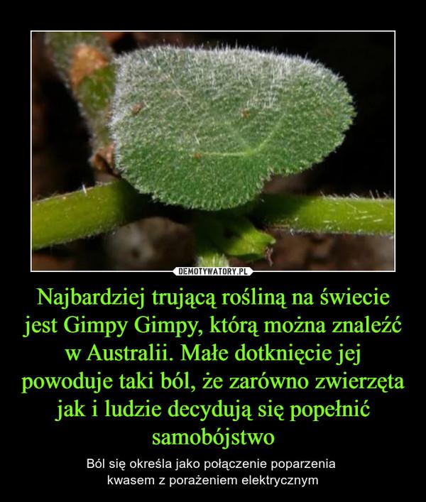 Najbardziej trującą rośliną na świecie jest Gimpy Gimpy, którą można znaleźć w Australii. Małe dotknięcie jej powoduje taki ból, że zarówno zwierzęta jak i ludzie decydują się popełnić samobójstwo – Ból się określa jako połączenie poparzenia kwasem z porażeniem elektrycznym