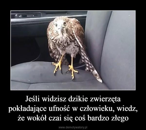 Jeśli widzisz dzikie zwierzęta pokładające ufność w człowieku, wiedz, że wokół czai się coś bardzo złego –