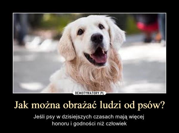 Jak można obrażać ludzi od psów? – Jeśli psy w dzisiejszych czasach mają więcej honoru i godności niż człowiek