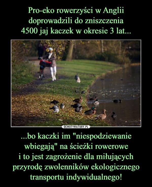 """...bo kaczki im """"niespodziewanie wbiegają"""" na ścieżki rowerowei to jest zagrożenie dla miłującychprzyrodę zwolenników ekologicznegotransportu indywidualnego! –"""