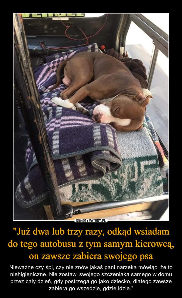 """""""Już dwa lub trzy razy, odkąd wsiadam do tego autobusu z tym samym kierowcą, on zawsze zabiera swojego psa – Nieważne czy śpi, czy nie znów jakaś pani narzeka mówiąc, że to niehigieniczne. Nie zostawi swojego szczeniaka samego w domu przez cały dzień, gdy postrzega go jako dziecko, dlatego zawsze zabiera go wszędzie, gdzie idzie."""""""
