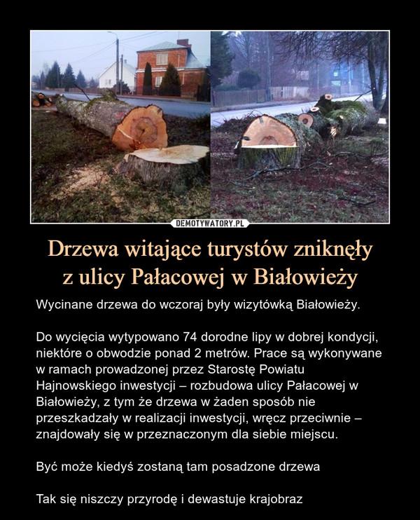Drzewa witające turystów zniknęłyz ulicy Pałacowej w Białowieży – Wycinane drzewa do wczoraj były wizytówką Białowieży.Do wycięcia wytypowano 74 dorodne lipy w dobrej kondycji, niektóre o obwodzie ponad 2 metrów. Prace są wykonywane w ramach prowadzonej przez Starostę Powiatu Hajnowskiego inwestycji – rozbudowa ulicy Pałacowej w Białowieży, z tym że drzewa w żaden sposób nie przeszkadzały w realizacji inwestycji, wręcz przeciwnie – znajdowały się w przeznaczonym dla siebie miejscu.Być może kiedyś zostaną tam posadzone drzewaTak się niszczy przyrodę i dewastuje krajobraz
