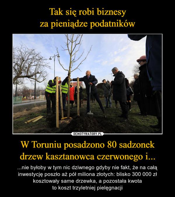 W Toruniu posadzono 80 sadzonekdrzew kasztanowca czerwonego i... – ...nie byłoby w tym nic dziwnego gdyby nie fakt, że na całą inwestycję poszło aż pół miliona złotych: blisko 300 000 zł kosztowały same drzewka, a pozostała kwotato koszt trzyletniej pielęgnacji