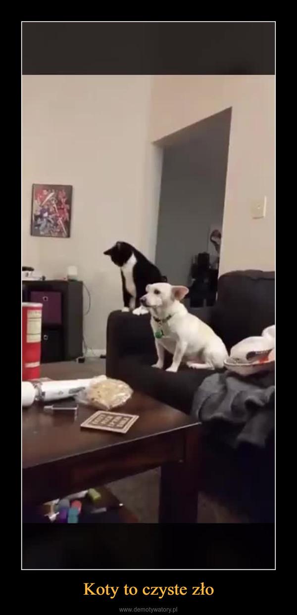 Koty to czyste zło –