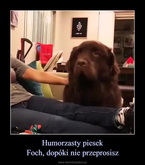 Humorzasty piesekFoch, dopóki nie przeprosisz –
