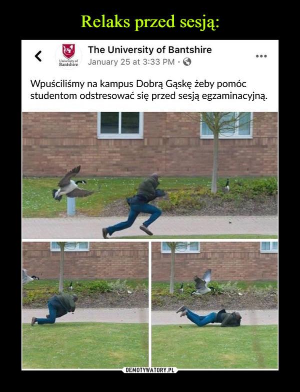 –  ^   The University of Bantshirefi*   January 25 at 3:33 PM • 0Wpuściliśmy na kampus Dobrą Gąskę żeby pomócstudentom odstresować się przed sesją egzaminacyjną.