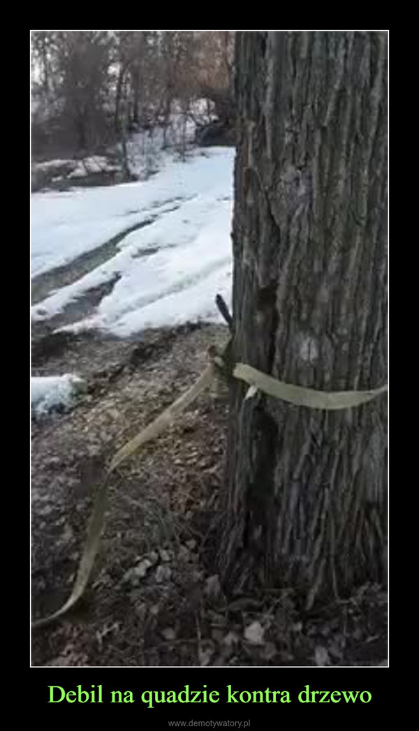 Debil na quadzie kontra drzewo –