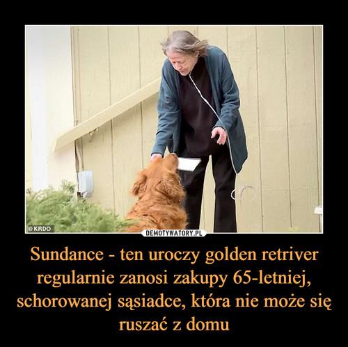 Sundance - ten uroczy golden retriver regularnie zanosi zakupy 65-letniej, schorowanej sąsiadce, która nie może się ruszać z domu