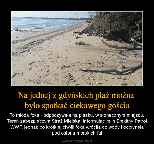 Na jednej z gdyńskich plaż można było spotkać ciekawego gościa – To młoda foka - odpoczywała na piasku, w słonecznym miejscu. Teren zabezpieczyła Straż Miejska, informując m.in Błękitny Patrol WWF, jednak po krótkiej chwili foka wróciła do wody i odpłynęła pod osłoną morskich fal