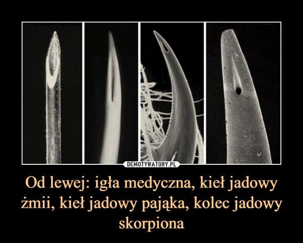 Od lewej: igła medyczna, kieł jadowy żmii, kieł jadowy pająka, kolec jadowy skorpiona –