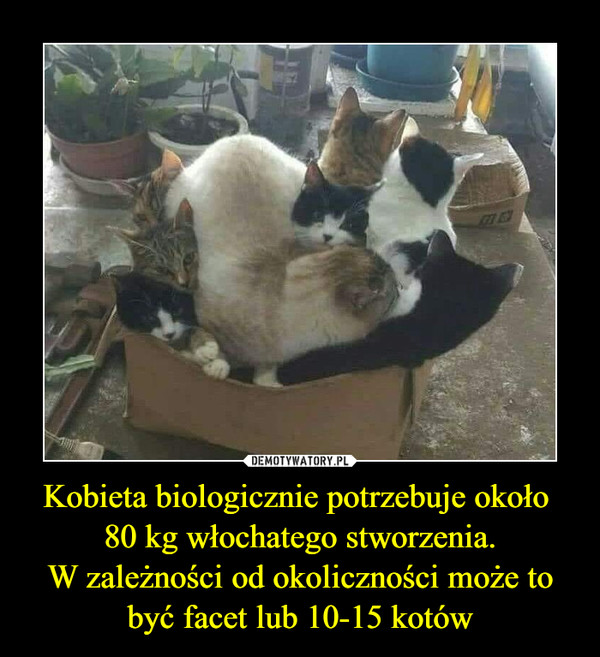 Kobieta biologicznie potrzebuje około 80 kg włochatego stworzenia.W zależności od okoliczności może to być facet lub 10-15 kotów –