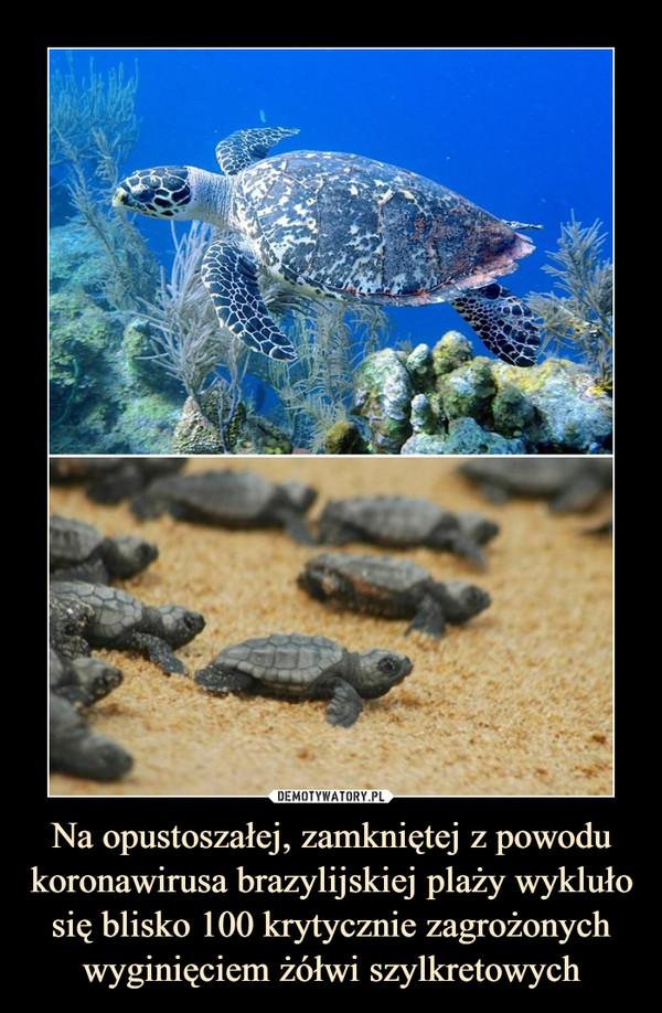 Na opustoszałej, zamkniętej z powodu koronawirusa brazylijskiej plaży wykluło się blisko 100 krytycznie zagrożonych wyginięciem żółwi szylkretowych –
