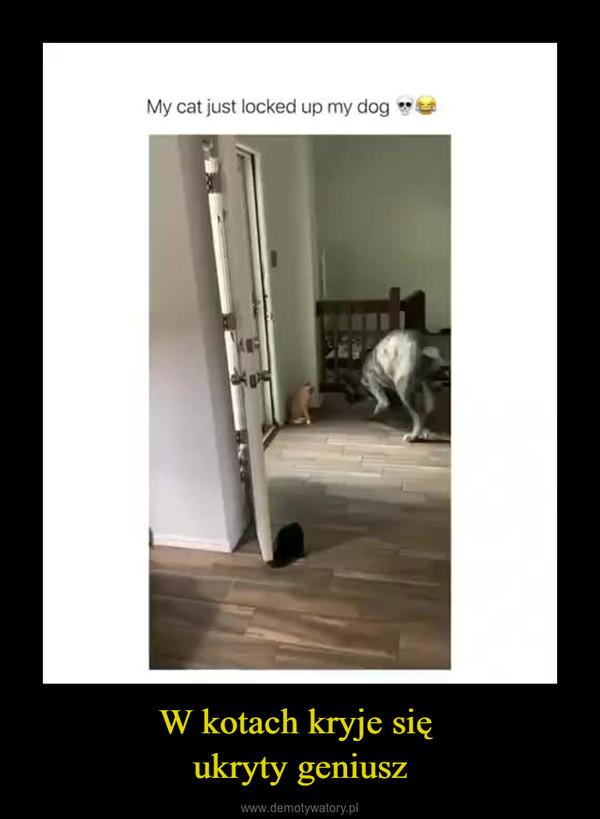 W kotach kryje się ukryty geniusz –