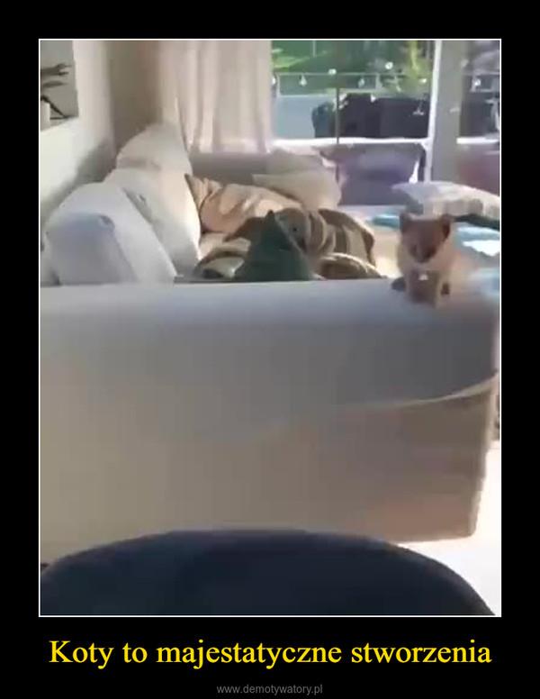 Koty to majestatyczne stworzenia –