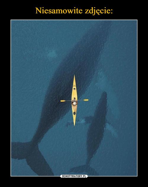 Niesamowite zdjęcie: