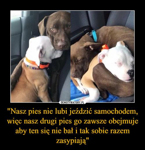 """""""Nasz pies nie lubi jeździć samochodem, więc nasz drugi pies go zawsze obejmuje aby ten się nie bał i tak sobie razem zasypiają"""""""