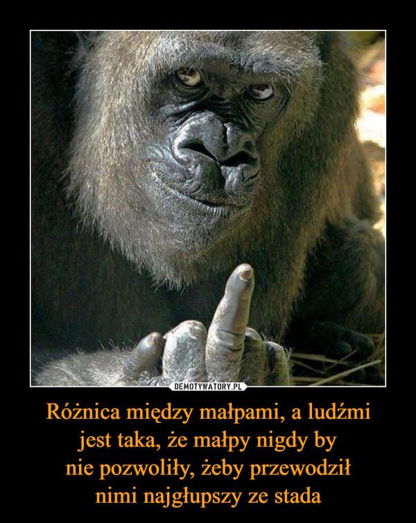 Różnica między małpami, a ludźmijest taka, że małpy nigdy bynie pozwoliły, żeby przewodziłnimi najgłupszy ze stada –