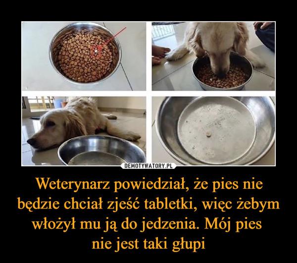 Weterynarz powiedział, że pies nie będzie chciał zjeść tabletki, więc żebym włożył mu ją do jedzenia. Mój pies nie jest taki głupi –