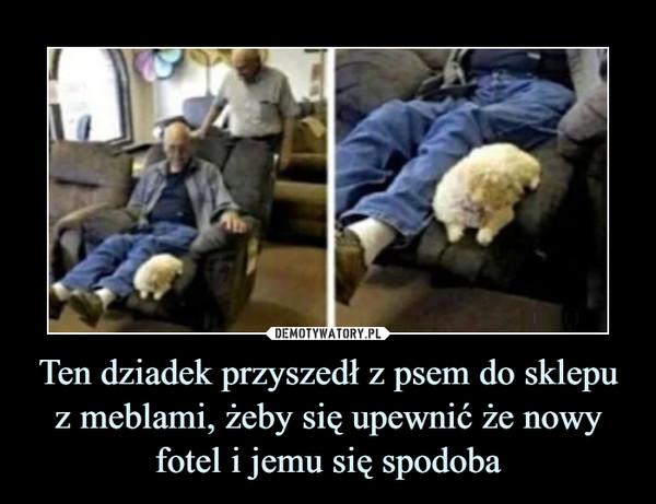 Ten dziadek przyszedł z psem do sklepu z meblami, żeby się upewnić że nowy fotel i jemu się spodoba –