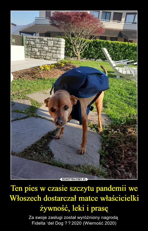 Ten pies w czasie szczytu pandemii we Włoszech dostarczał matce właścicielki żywność, leki i prasę – Za swoje zasługi został wyróżniony nagrodą Fidelta 'del Dog 2020 (Wierność 2020)
