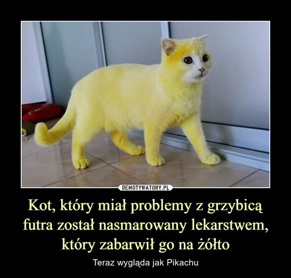 Kot, który miał problemy z grzybicą futra został nasmarowany lekarstwem, który zabarwił go na żółto – Teraz wygląda jak Pikachu