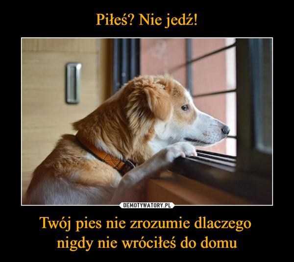 Twój pies nie zrozumie dlaczego nigdy nie wróciłeś do domu –