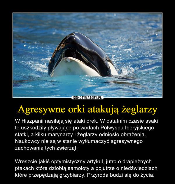 Agresywne orki atakują żeglarzy – W Hiszpanii nasilają się ataki orek. W ostatnim czasie ssaki te uszkodziły pływające po wodach Półwyspu Iberyjskiego statki, a kilku marynarzy i żeglarzy odniosło obrażenia. Naukowcy nie są w stanie wytłumaczyć agresywnego zachowania tych zwierząt.Wreszcie jakiś optymistyczny artykuł, jutro o drapieżnych ptakach które dziobią samoloty a pojutrze o niedźwiedziach które przepędzają grzybiarzy. Przyroda budzi się do życia.