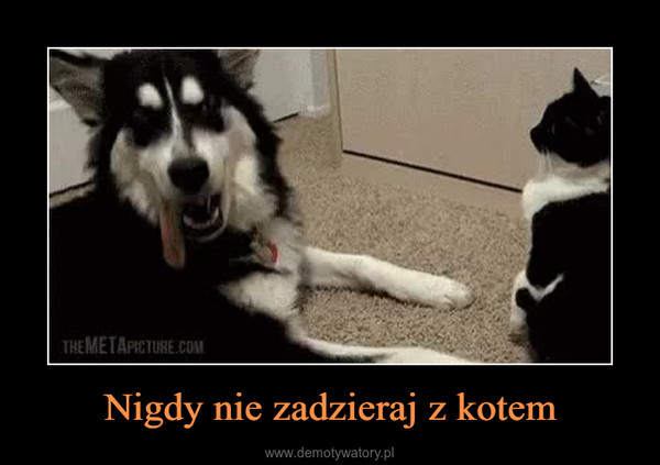 Nigdy nie zadzieraj z kotem –