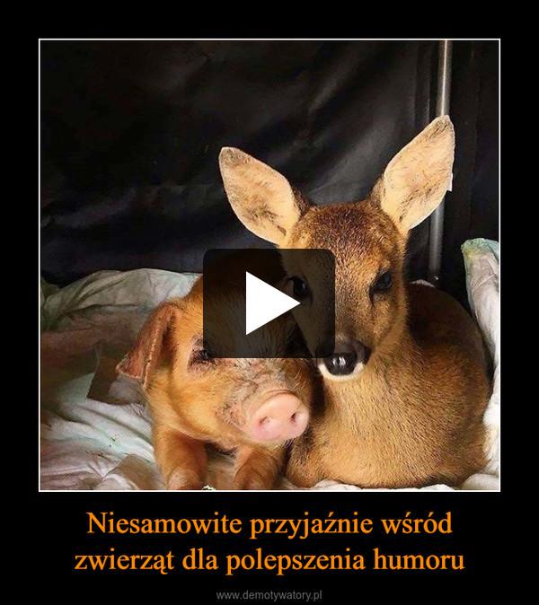 Niesamowite przyjaźnie wśródzwierząt dla polepszenia humoru –