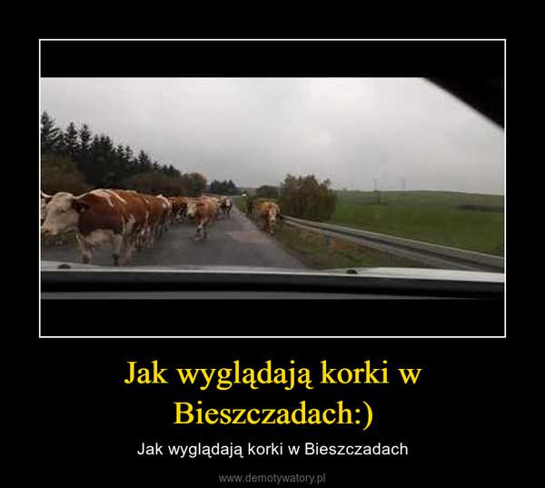 Jak wyglądają korki w Bieszczadach:) – Jak wyglądają korki w Bieszczadach