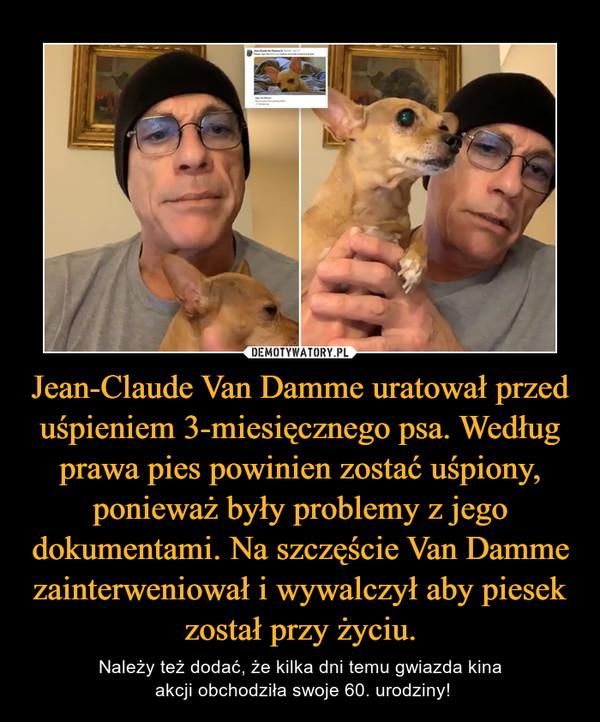 Jean-Claude Van Damme uratował przed uśpieniem 3-miesięcznego psa. Według prawa pies powinien zostać uśpiony, ponieważ były problemy z jego dokumentami. Na szczęście Van Damme zainterweniował i wywalczył aby piesek został przy życiu. – Należy też dodać, że kilka dni temu gwiazda kina akcji obchodziła swoje 60. urodziny!