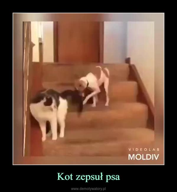 Kot zepsuł psa –
